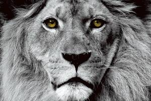 ☞ Hrdost ☜